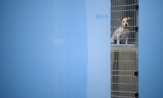 Bipartisan Group Opposes The Use Of Dogs In Gov't Research