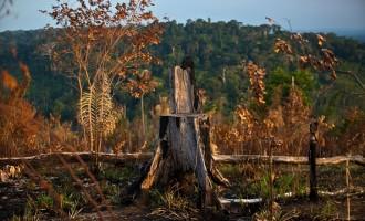 Brazil's Amazon rain forest