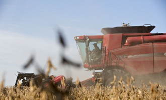 Soybeans Fall From One-Week High