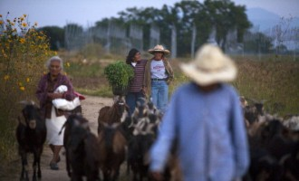No Man's Land: The Women of Mexico