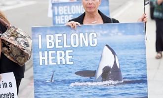 PETA Urges 'No' Vote On SeaWorld's Proposed New Orca Prisons