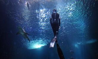 FRANCE-AQUARIUM-DIVING-SHARK-  OFFBEAT