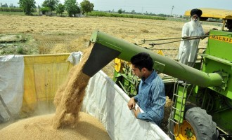 Wheat harvesting in full swing ahead of Baisakhi festival